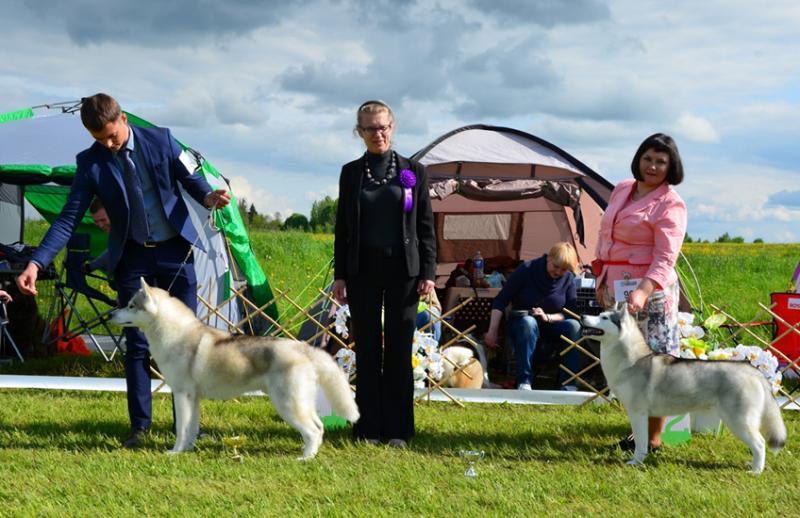 Maple Taffy of Poliarine Arktika - Ex.1 (2), CAC, best female, BOS Thranduil of Poliarine Arktika - Ex.1 (2), CAC, best male, BOB/ Lithuanian 5 FCI Club Show Winner'15 Judge Irina Azen